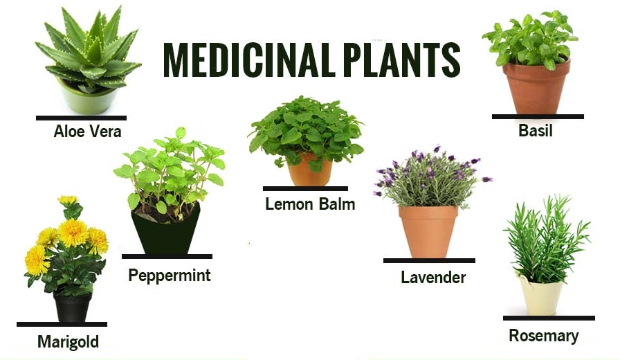 Medicinal Plants and their uses with pictures