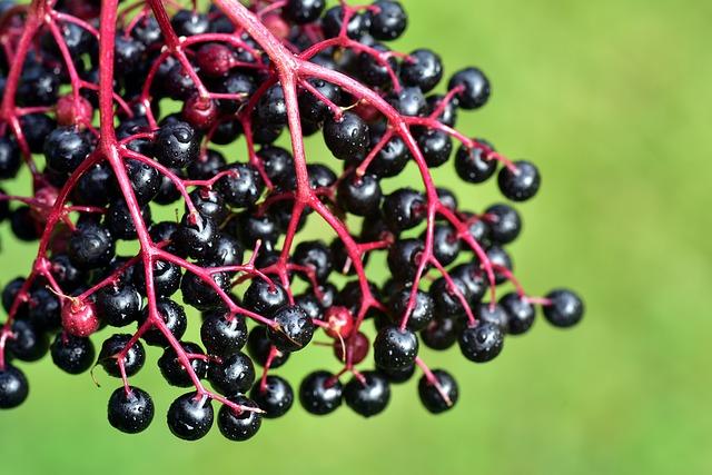 Five Benefits Of Elderberry Gummies For Kids That May Change Your Perspective